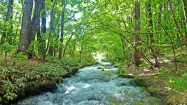 油川の新緑