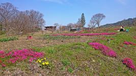 何気ない春の畑