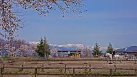 春のホースランド安曇野