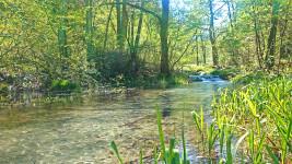 新緑の烏川