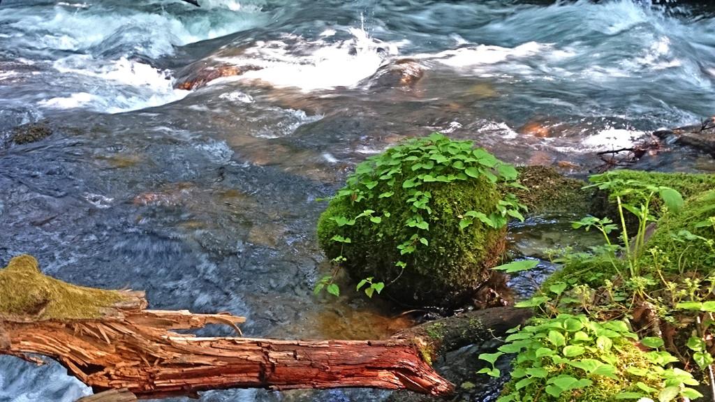 涼を感じる渓流の風景