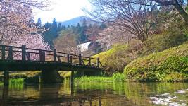 桜の終りかけの満願寺