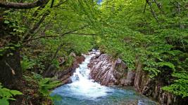 中房川の新緑