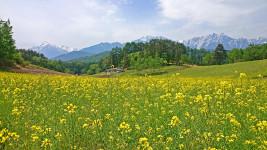 菜の花咲く中山高原