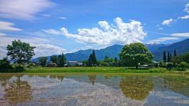水田と夏を感じさせられる空