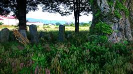 大木の下のお墓
