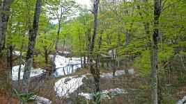 奥裾花自然園の新緑と残雪1