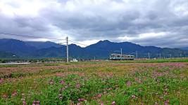 大糸線と蓮華草のお花畑