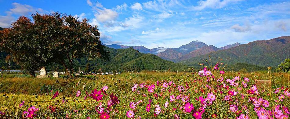 秋、秋桜と常念岳