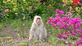 満願寺で見かけた白いおサル
