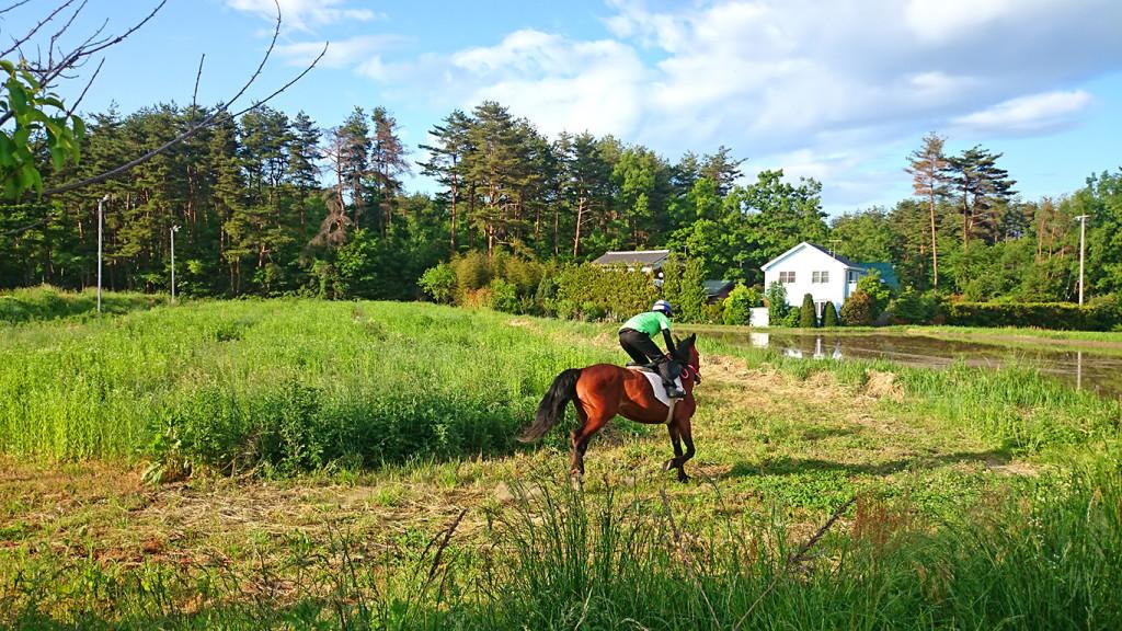 田んぼの真ん中で乗馬2
