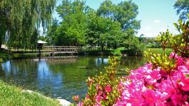 初夏の安曇野わさび田湧水群公園