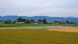 小麦畑、大麦畑、水田。