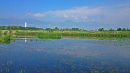 初夏の御宝田遊水池