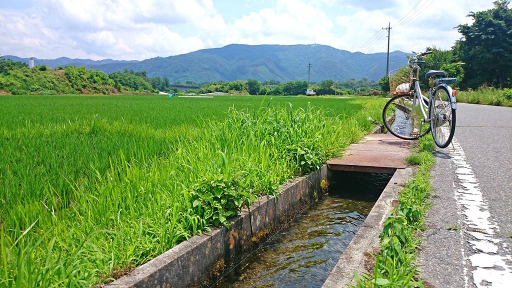 田んぼ脇の自転車