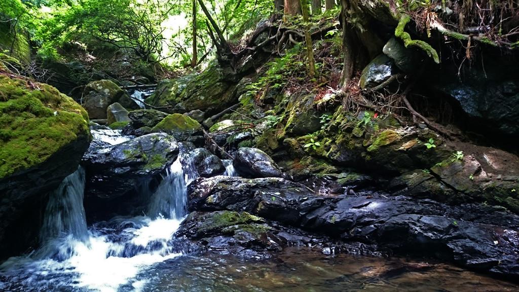 黒沢川上流