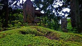 青原寺参道の苔
