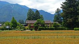 曽根原家住宅と小麦畑