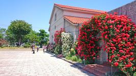 豊科近代美術館と薔薇1