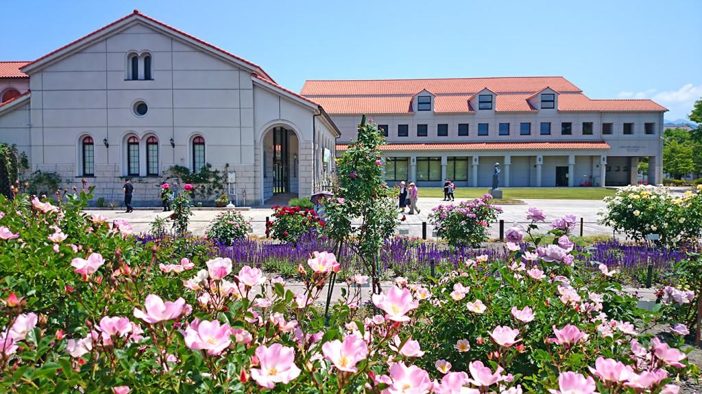 豊科近代美術館と薔薇3