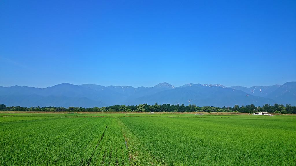 夏の常念岳と田んぼ