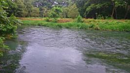 蓼川と万水川の合流