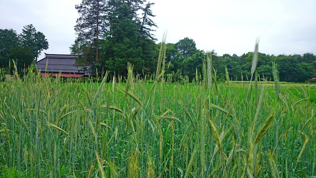ライ麦と古民家