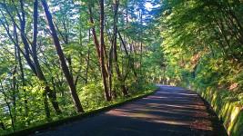 長峰山の林道