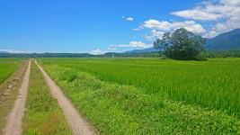 松川村山麓線近くの轍と田園風景