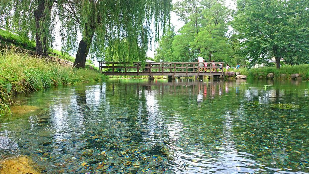 夏の安曇野わさび田湧水群公園