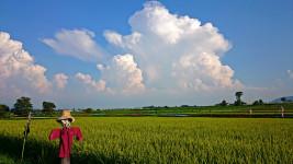 夏の雲(信濃太郎)と案山子と田園風景