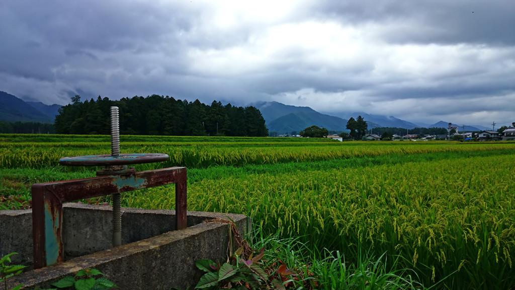有明の用水路の水門・田んぼ・諏訪神社の鎮守の杜