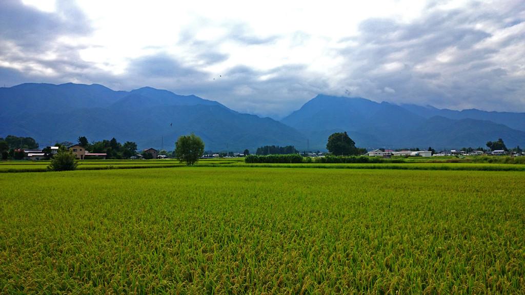 雲に隠れる有明山と色づき始めた田んぼ