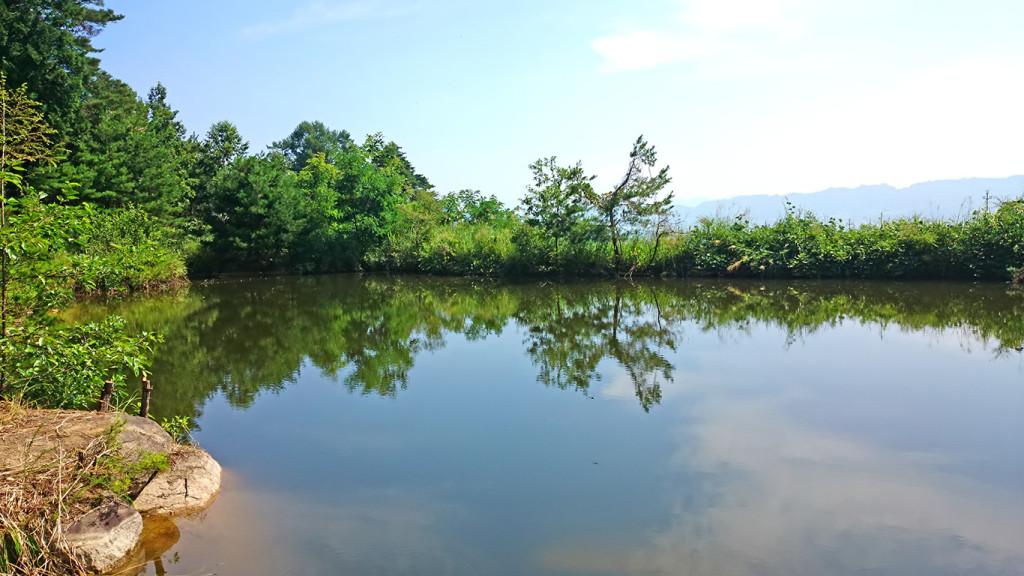 鼠穴橋近くの池