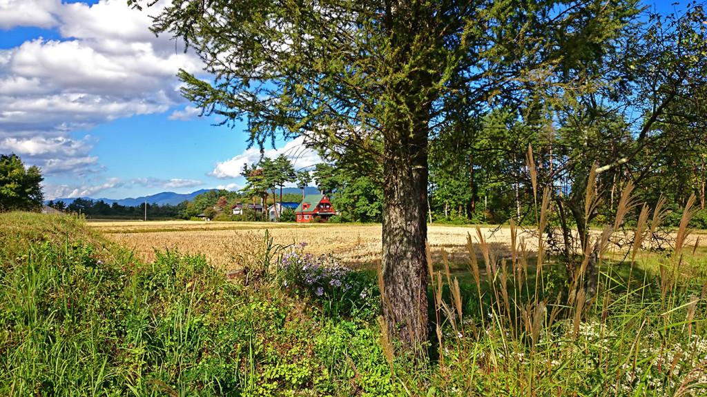 古厩付近の何気ない秋の風景