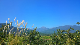 ススキと青りんごと常念岳