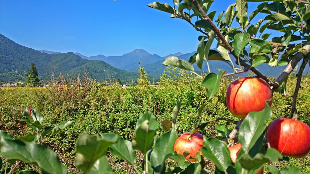 赤リンゴと赤トンボと常念岳