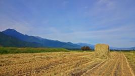 稲刈り後の巻藁
