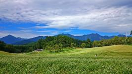 中山高原の蕎麦の花