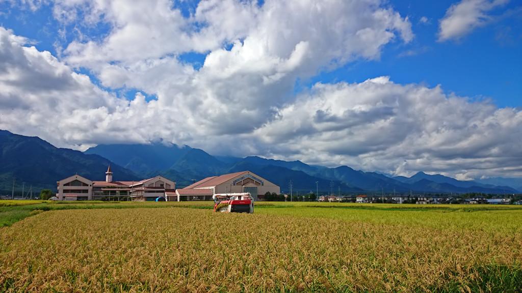 穂高西中学と稲刈りの風景