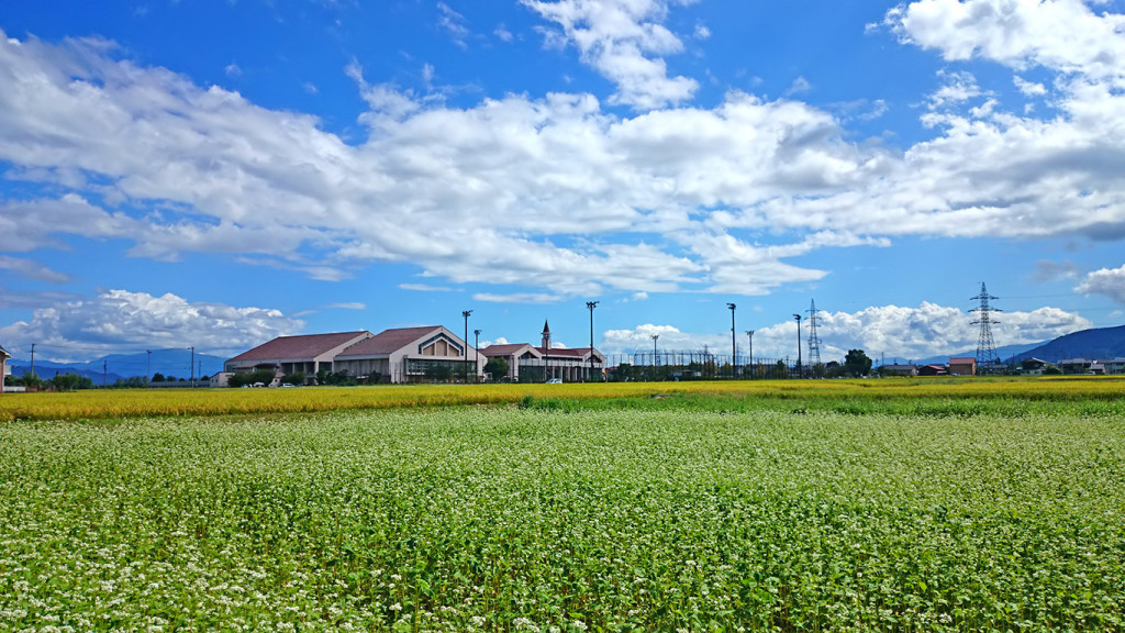 穂高西中学と蕎麦の花