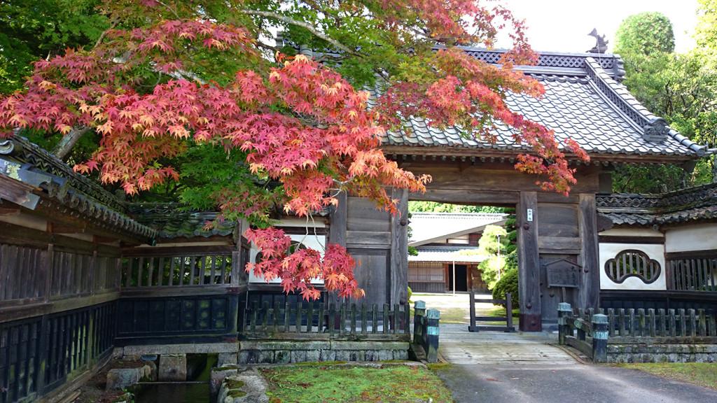 大庄屋山口家の前の紅葉が始まったカエデ