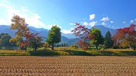 有明の森保育園の横から紅葉と有明山