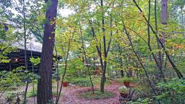 ティータイム ガルニの庭の紅葉