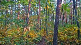 家の周囲の林の小道