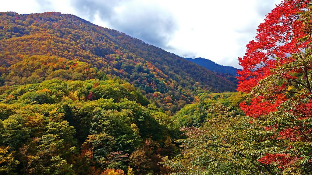 烏川渓谷の紅葉1
