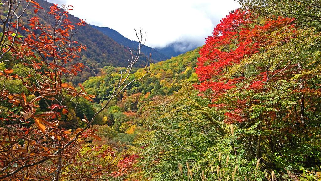 烏川渓谷の紅葉2