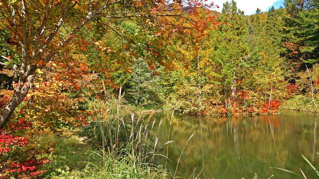 烏川渓谷 まゆみ池の紅葉