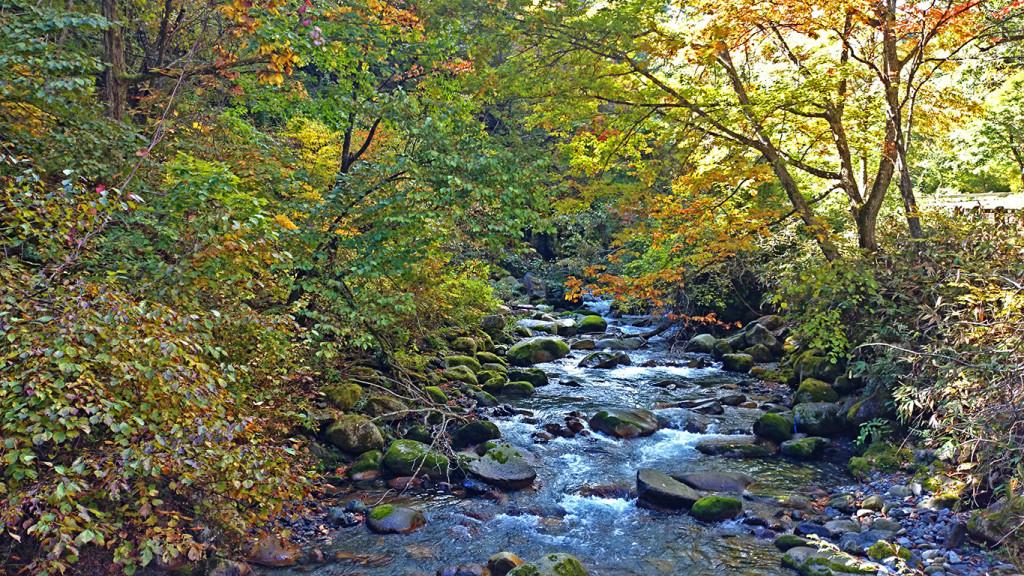 烏川上流の紅葉