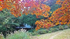 満願寺の紅葉2